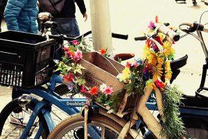 Vrolijke fietsen in Amsterdam