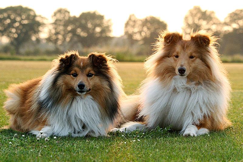 Fotoserie: Harige hartelijke hondjes