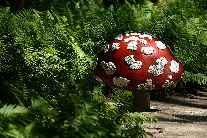 De paddenstoelen van de Efteling