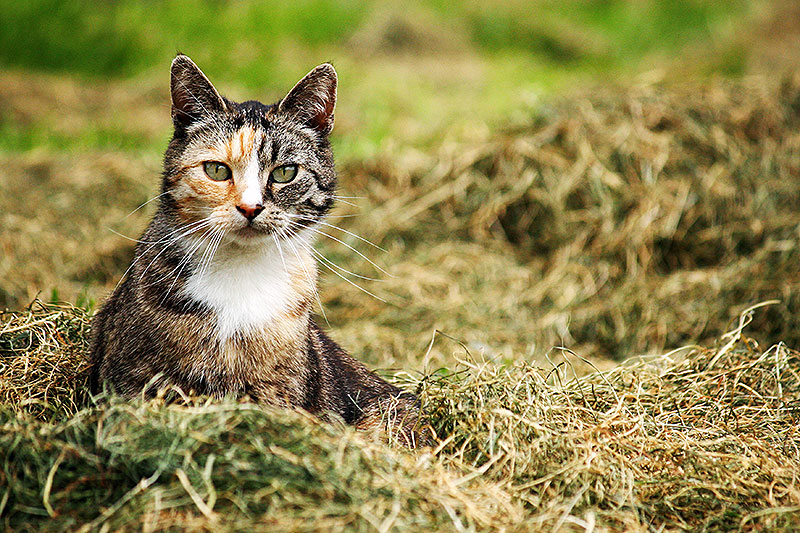 Fototips: Katten fotograferen