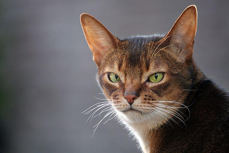 16 Redenen waarom de kat boos op je is