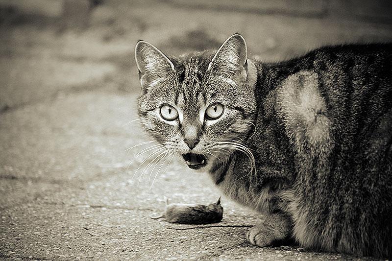De heldhaftige muis