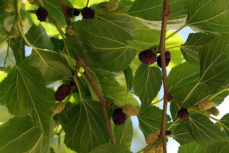 Ik at een nieuw soort fruit van de boom