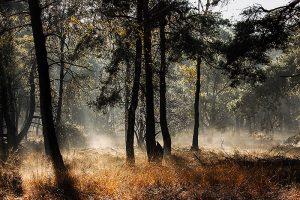 Fotoserie: Een bos om van te stralen