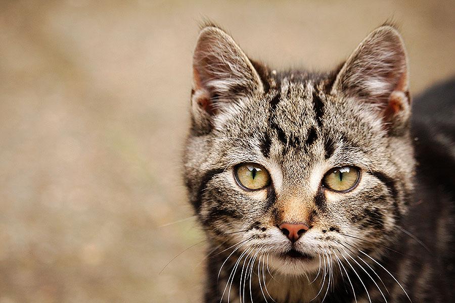 14 redenen om nooit aan een kitten te beginnen