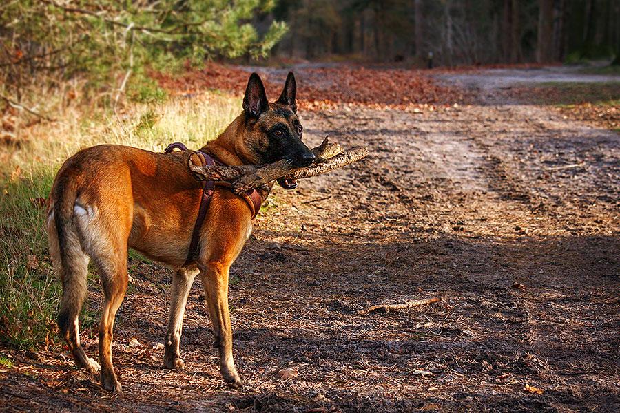 Fotoserie: De hond met alle stokken